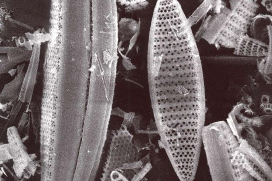Diatoms_WEB.jpg