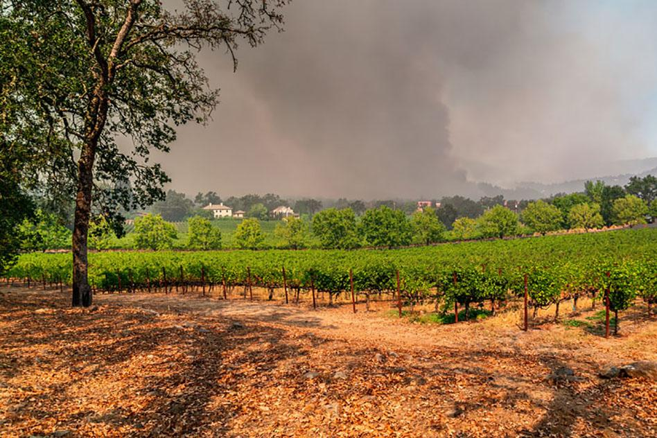 1020_Napa_drought_fire_974_WEB.jpg