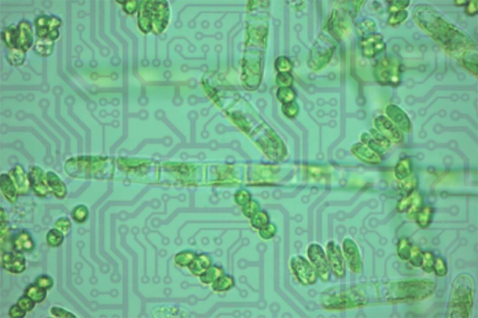 phytoplankton-chips-darwin-project-mit-00_0_WEB.jpg