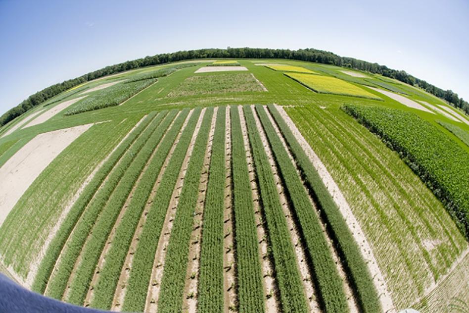 kellogg-biological-station-mit-irrigation-water-study-00_0_WEB.jpg